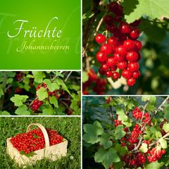 Früchte Set Johannisbeeren Ribes