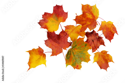 canvas print picture Herbstlaub, isoliert
