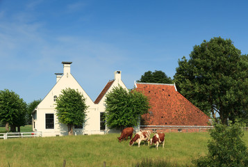 Cows grazing in front of an old farm.