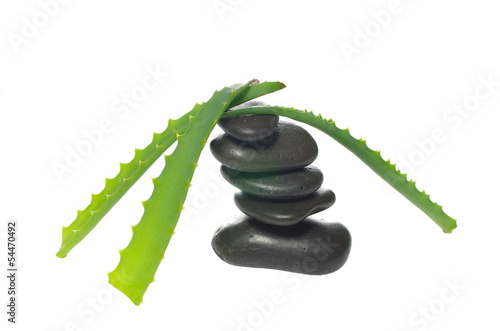 aloe leaf and stones