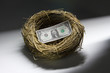 One dollar bill inside a bird's nest, horizontal