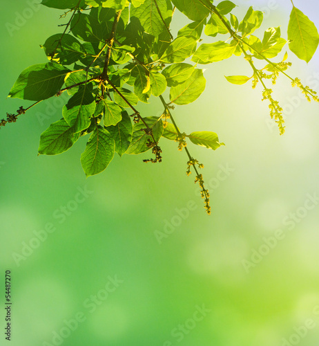 natural green background..