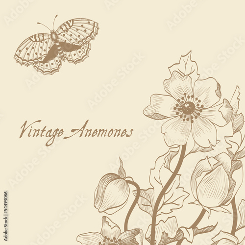 anemone; butterfly; background;  brown; card; vintage