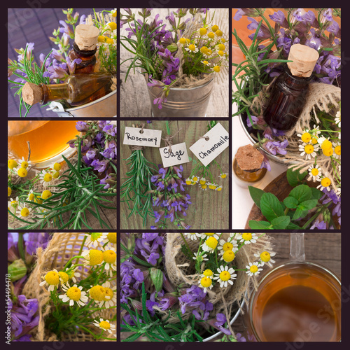Plakat sage, chamomile, mint and other herbs collage