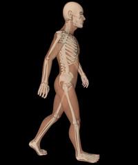Uomo profilo ai raggi x camminata scheletro