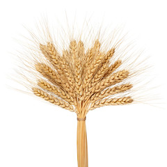 Wheat bunch isolated on white background