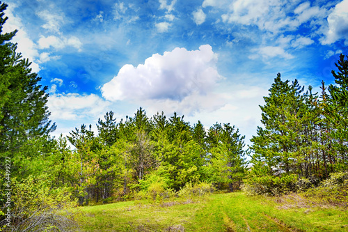 Beautiful pine forest landscape with rural road