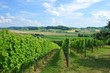 Leinwanddruck Bild - Picture of winery garden, blue sky, beautiful agricultural