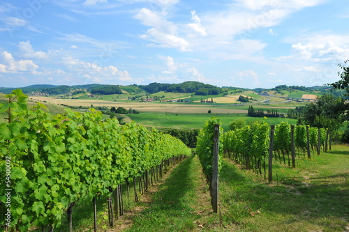 Leinwanddruck Bild Picture of winery garden, blue sky, beautiful agricultural
