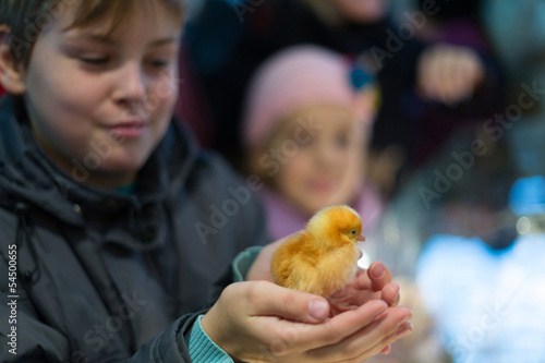 A boy holds a chicken