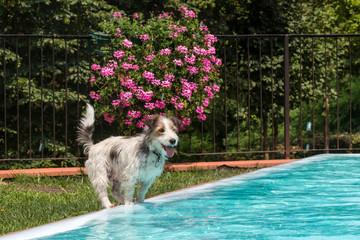 Un amico in piscina