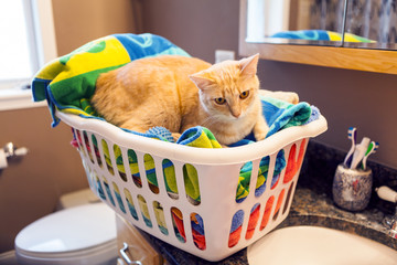 Young Cat in laundy basket