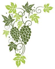 Weinrebe, Ranke, Weinblätter, Weintrauben, Wein