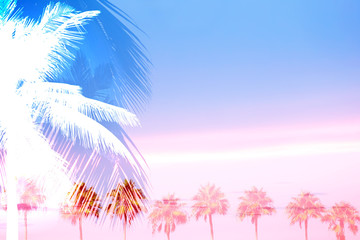 Tropical Palm Trees Collage