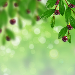 Cherry and leaves