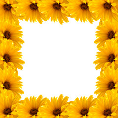 Frame of yellow flowers