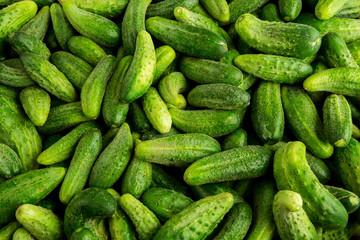 green cucumbers, background