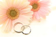 Pink Gerbera and wedding ring