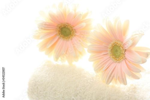 pastel pink gerbera on towel for interior goods image