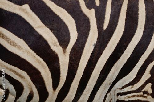 Fototapeten,zebra,park,afrika,haut
