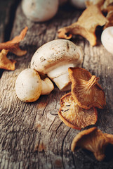 White Mushrooms and Dried Chanterelle, toned