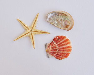 marine life on white background