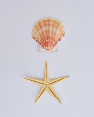 starfish and seashell on white background