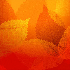 Dry autumn leaves template. EPS 10