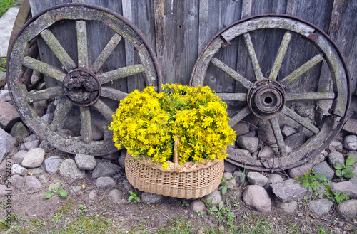 St Johns wort medical flowers in basket and old carriage wheels