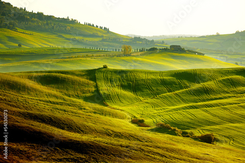 Countryside, San Quirico´Orcia , Tuscany, Italy - 54530073