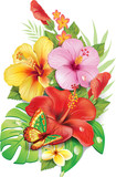 Bouquet of tropical flowersv
