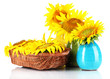 Beautiful sunflowers in color vases and wicker basket, isolated