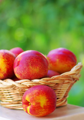 Basket full of ripe peaches