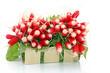 Barquette de radis frais