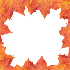 frame from autummmn mapple leaves