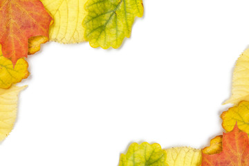 border from different autumn leaves