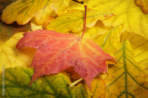 different autumn leaves