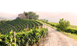 landscape with vineyards and church - 54546858