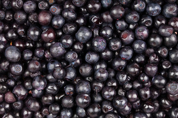 bilberry background