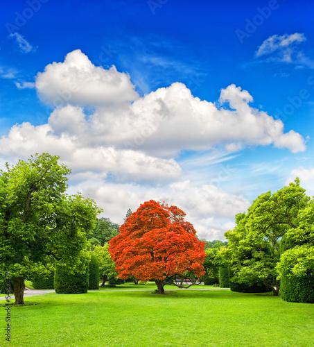 Fototapeten,himmel,belle,blau,botanical