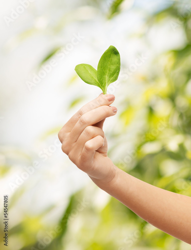 woman hand with green sprout