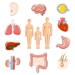 Human organs set. Silhouette people. Vector