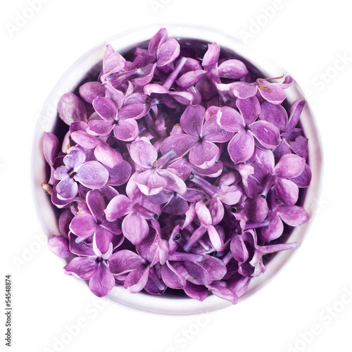 lilac in a cup