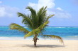 Guam, Palm tree on the beach