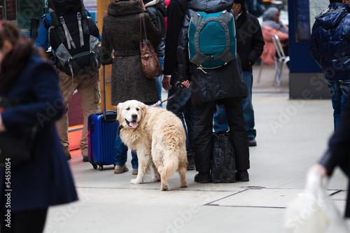 canvas print picture mit Hund auf Reisen