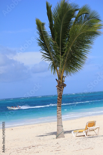 Beach chair under a palm tree