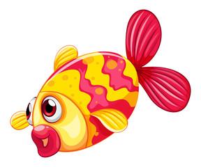 A pouty fish