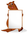 A sealion holding an empty whiteboard