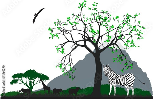 Zebra under the tree in Africa