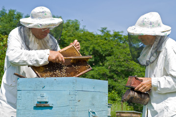 Beekeepers at hive 5